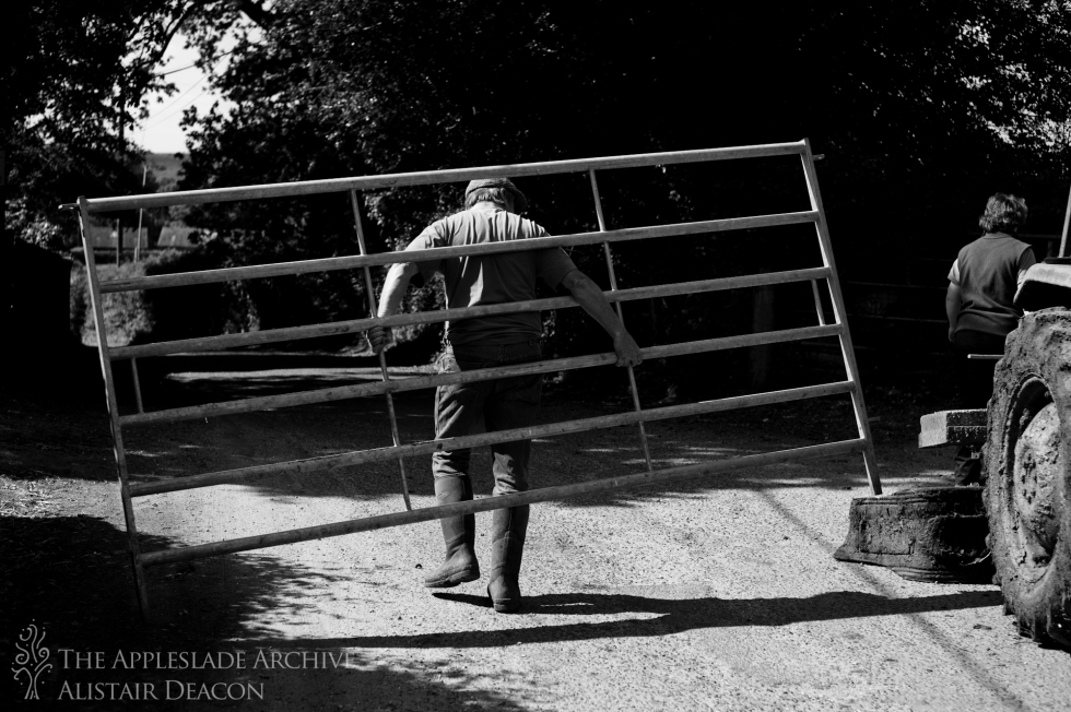 Mark Deacon moves a gate in preparation for foot trimming, Toms Farm, Lindwood, New Forest, Hampshire, 9th June 2013