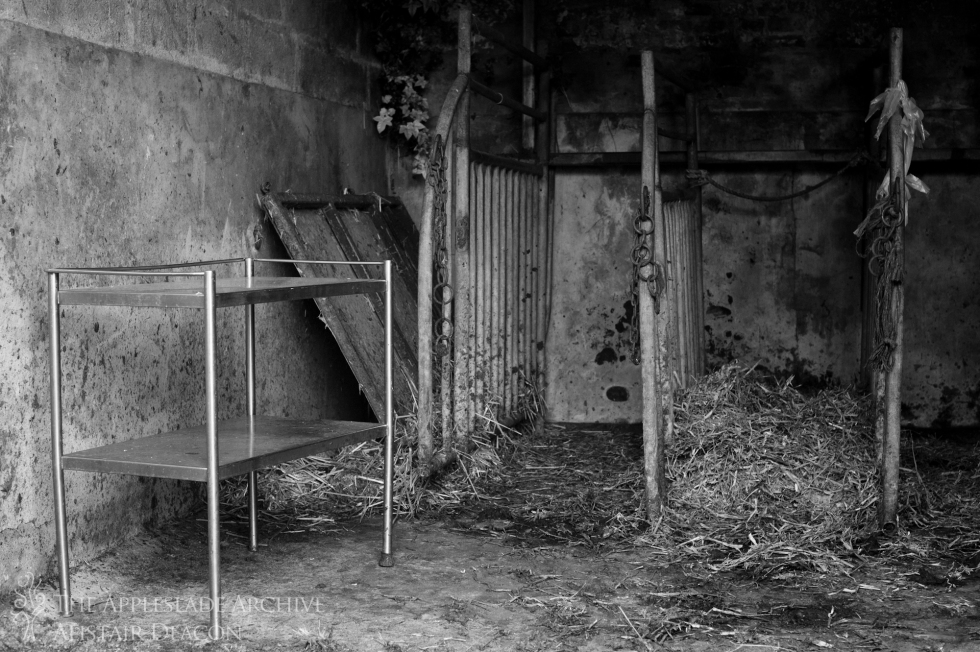 The AI pens where cattle are flushed and inseminated, Ayles Farm, Avon, Dorset, 24th June 2013