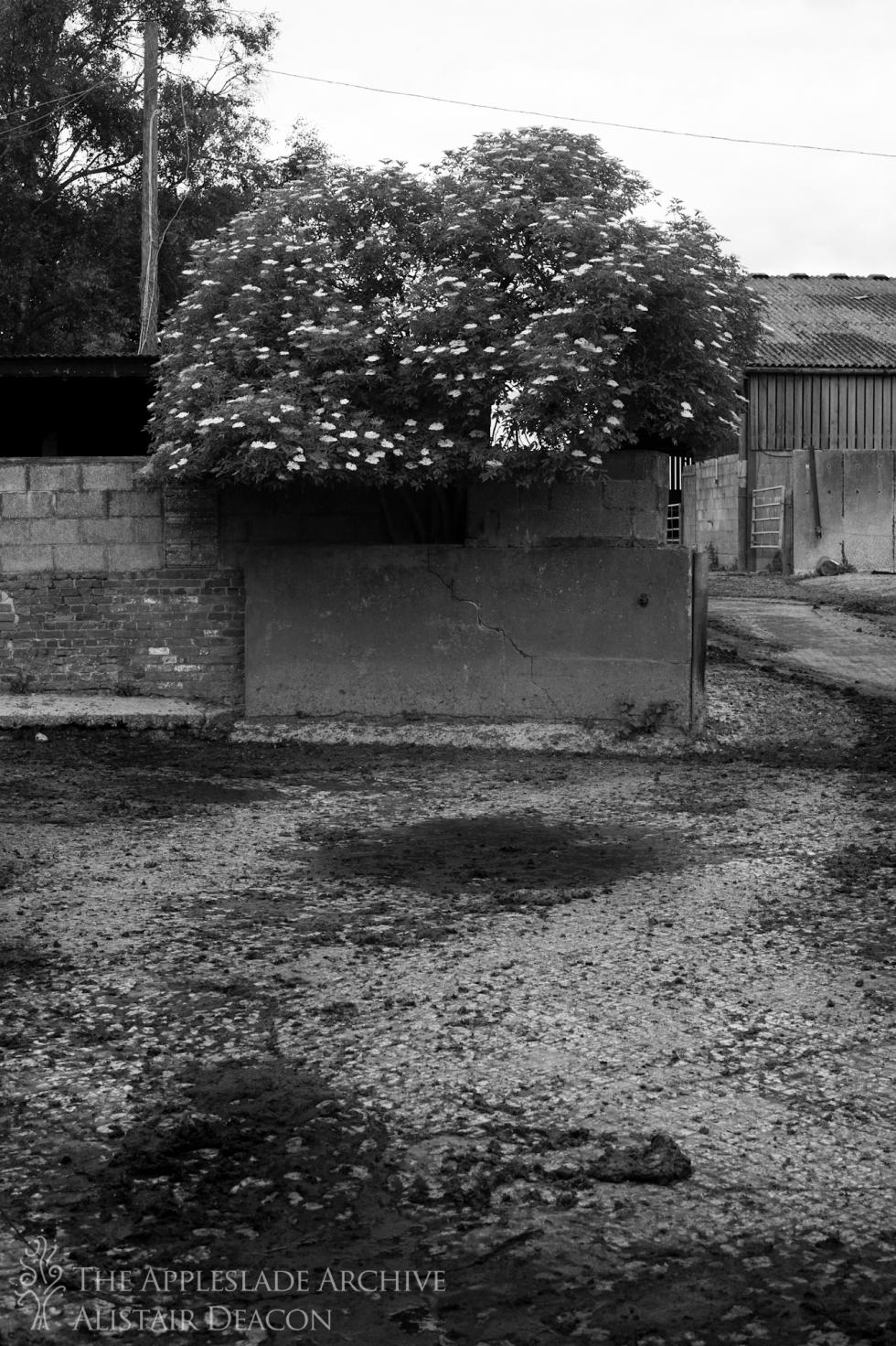 The collecting yard, Ayles Farm, Avon, Dorset, 24th June 2013
