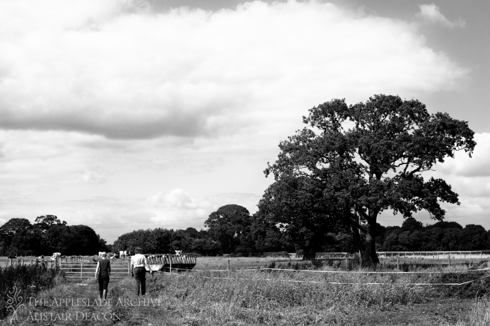 Caroline Moody and the vet bringing in cattle for TB testing, Ayles Farm, Christchurch, Dorset, 9th Aug 2013