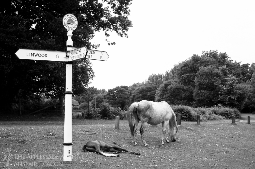 A mare and her foal at Moyles Court, New Forest, Hampshire, 26th June 2013