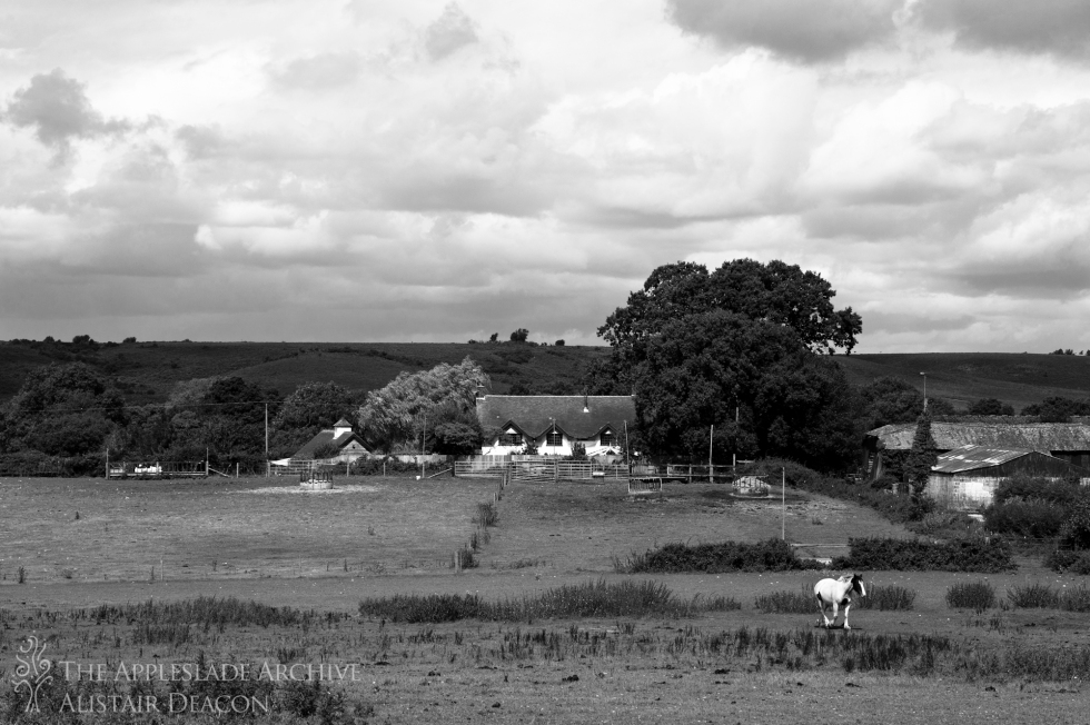 The view from Yew Tree Cottage towards Ibsley Common, Linwood, New Forest, Hampshire, 18th Aug 2013