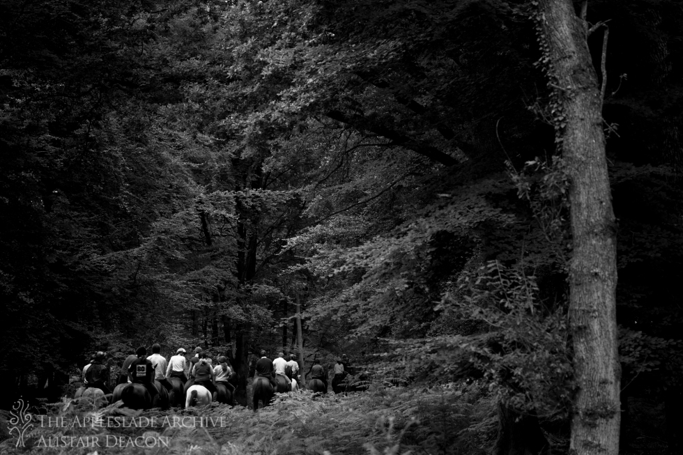 Riding out for the first sweep, Backley Drift, Bratley Wood, New Forest, Hampshire, 22nd Sept 2013