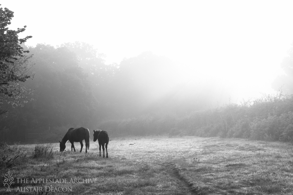 Ponies grazing in the morning light, Yew Tree Cottage, Linwood, New Forest, Hampshire, 25th Sept 2013
