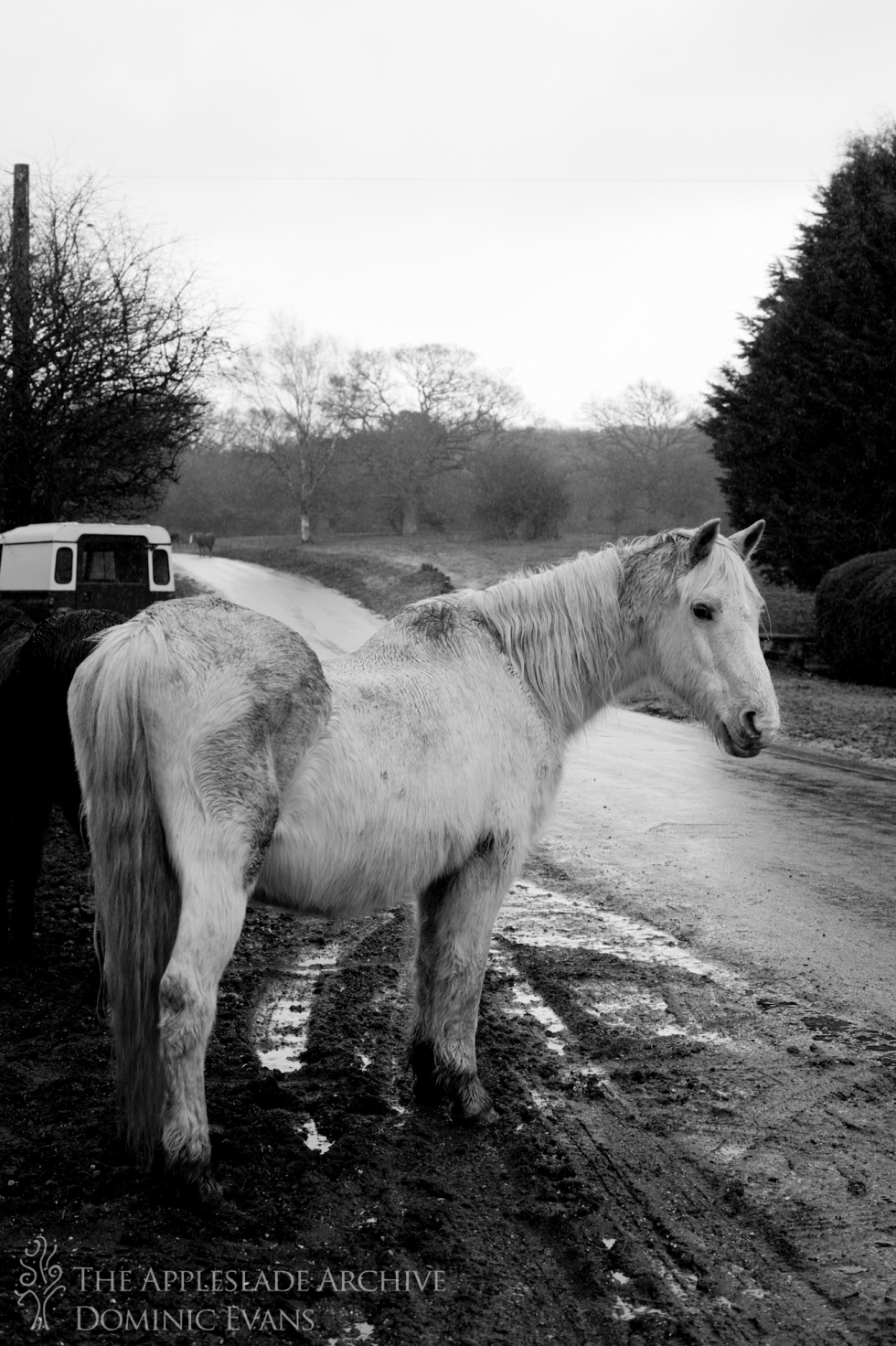 A New Forest Pony, Linwood, New Forest, Hampshire, 18th March 2013