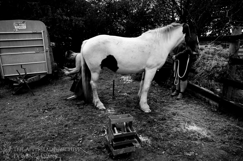 Tom Sampson, a farrier, trimming the feet of a horse owned by The Deacons, Linwood, New Forest, Hampshire, 11th Sept 2013