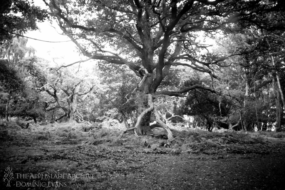 Pinnick Wood, New Forest, Hampshire, 12th Sept 2013