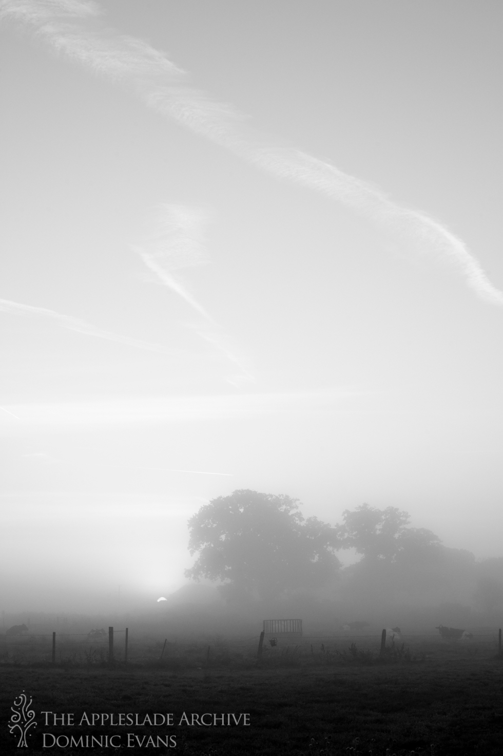Early morning mist over the fields, Ayles Farm, Avon, Dorset, 15th Sept 2013