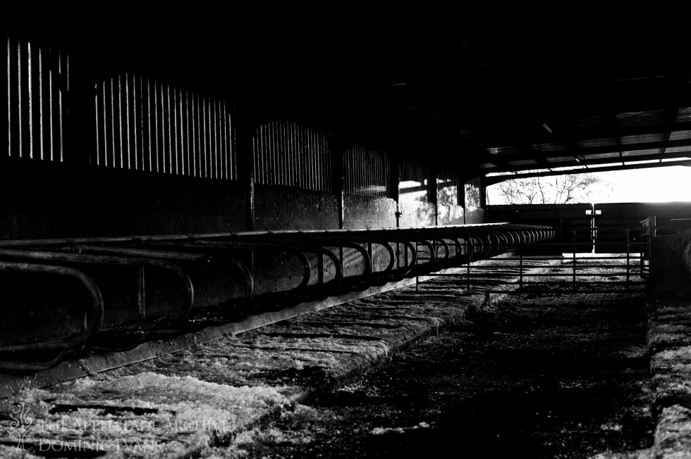 The cattle shed, Ayles Farm, Avon, Dorset, 15th Sept 2013
