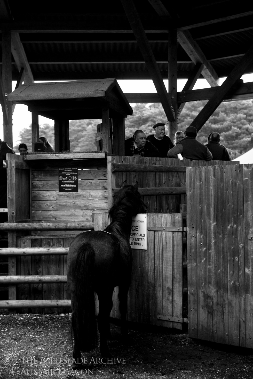 A pony in the sale ring, Beaulieu Road, New Forest, Hampshire, 28th Nov 2013