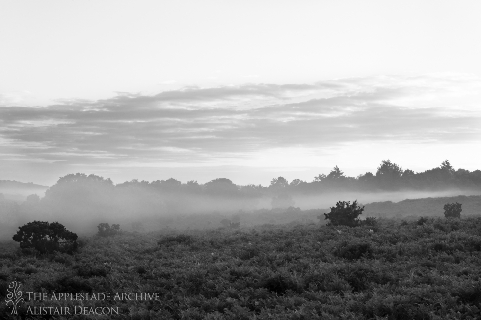 Early morning mist over Dockens Water, Hampshire, New Forest, 19th Aug 2013