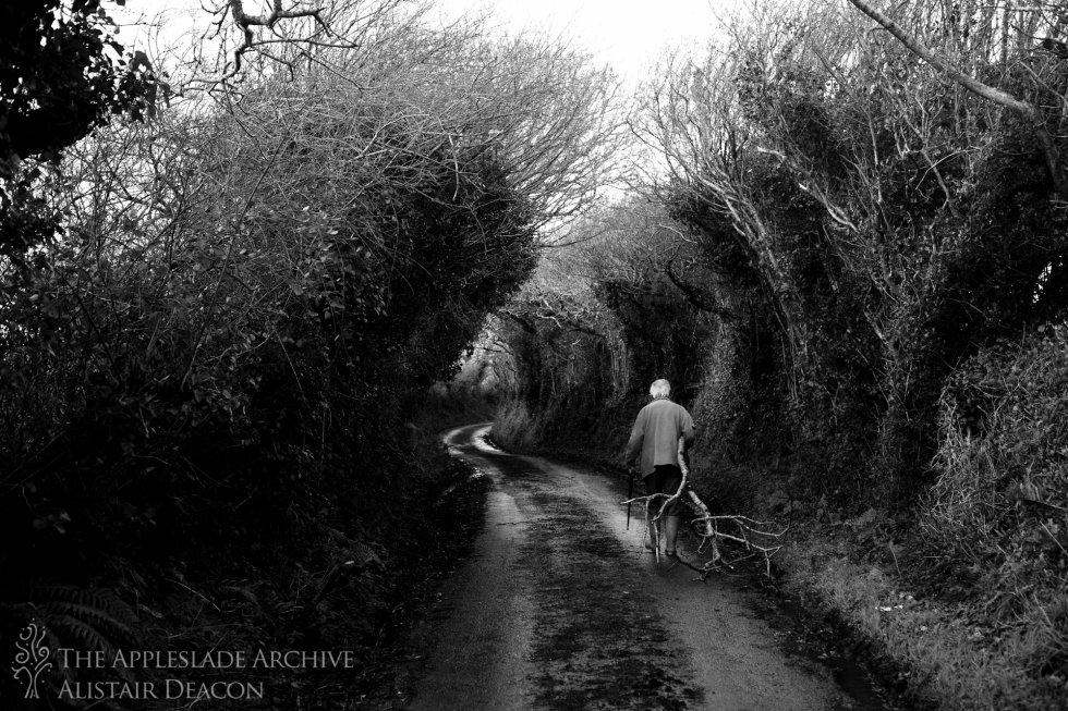 Stanley Matthews bringing home a fallen branch for firewood, St. Enoder, Nr. Fraddon, Cornwall, 26th Jan 2014