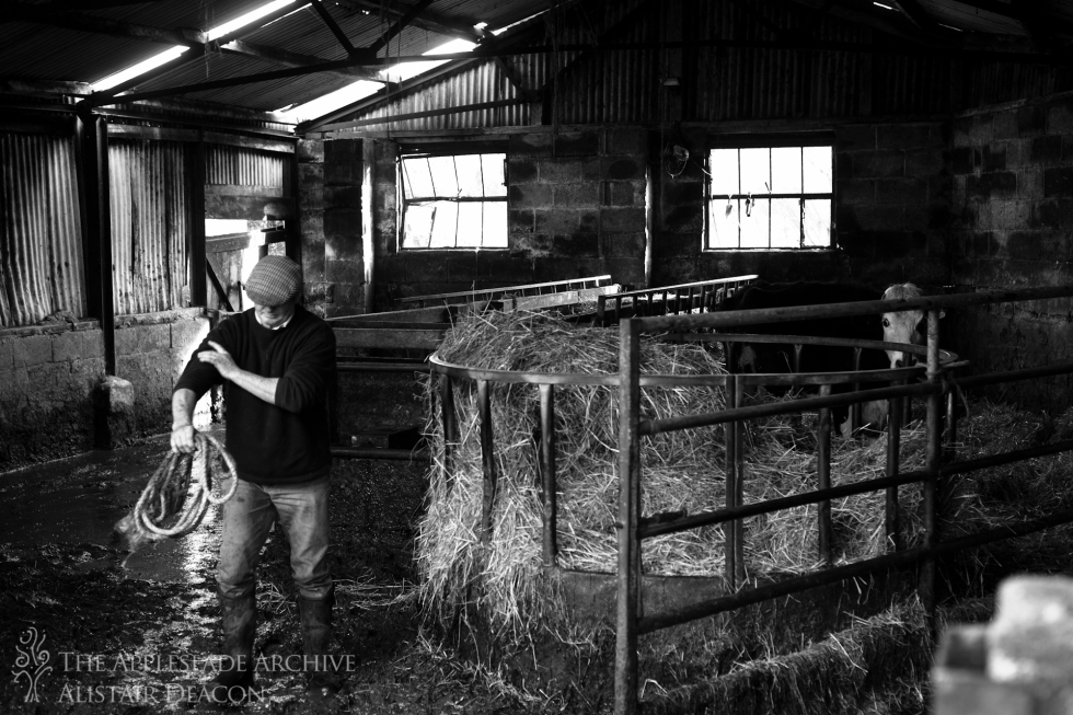 Mark Deacon in the cow shed, Toms Farm, Linwood, New Forest, Hampshire, 3rd Feb 2014