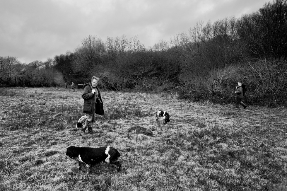 Gundogs and beaters walking to the start of the next drive, St. Enoder, Nr. Fraddon, Cornwall, 25th Jan 2014