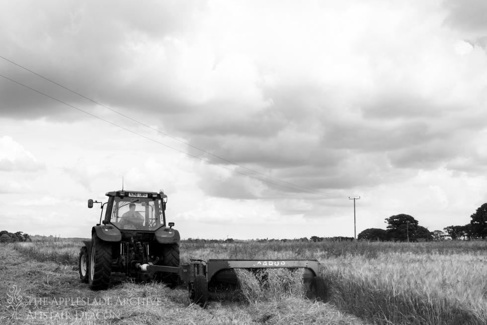 Alan Pyle cutting wholecrop for silage, Ayles Farm, Avon, Dorset, July 2014