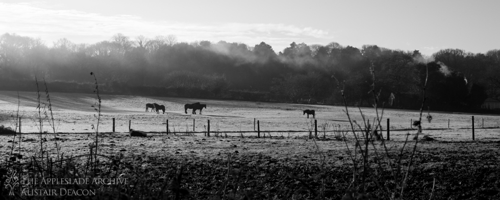Early morning towards Yew Tree Cottage, Linwood, New Forest, Hampshire, December 2014